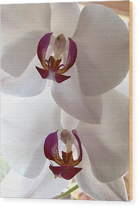 White Orchid Wood Print by Eva Csilla Horvath