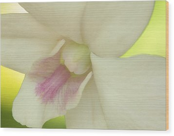 Wood Print featuring the photograph White Orchid by Greg Allore