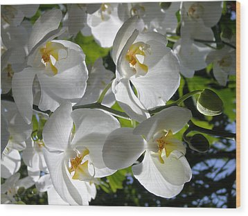 White Orchid In Light Wood Print by Shirin Shahram Badie