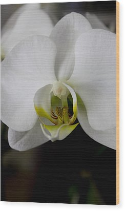 White Orchid Wood Print by Ivete Basso Photography