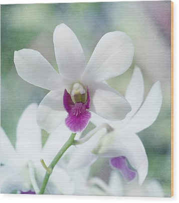 White Orchid Wood Print by Kim Hojnacki