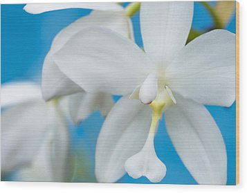 Wood Print featuring the photograph White Orchid by Leigh Anne Meeks