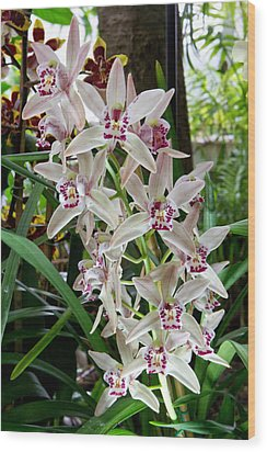 White Orchids 1 Wood Print by Timothy Blair