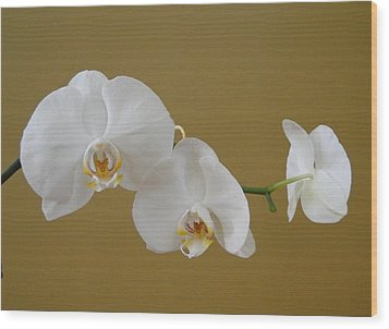 White Orchid's Wood Print by Cindy Croal