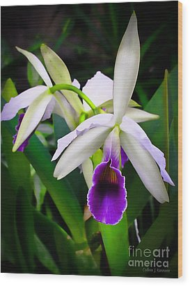 White Orchids Wood Print by Colleen Kammerer