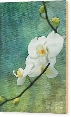 White Orchids Wood Print by Darren Fisher