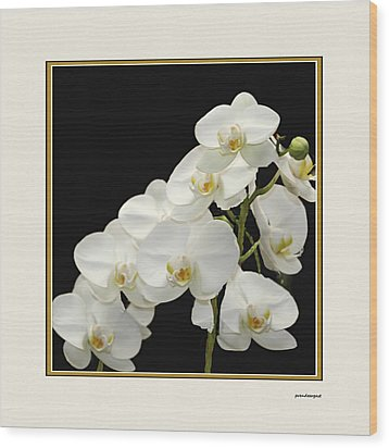 White Orchids II Wood Print by Tom Prendergast