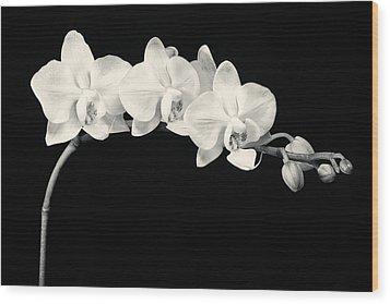 White Orchids Monochrome Wood Print