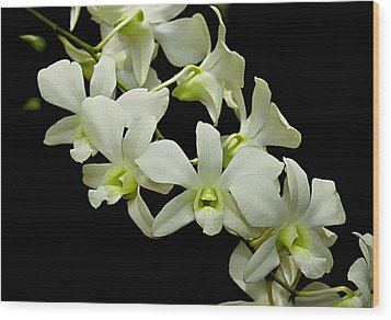 White Orchids Wood Print by Swank Photography