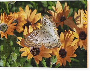 Wood Print featuring the photograph White Peacock Butterfly by Cindy McDaniel