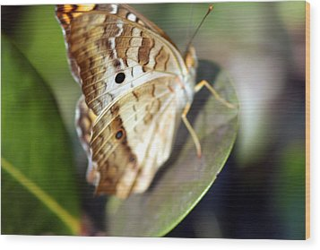 Wood Print featuring the photograph White Peacock Butterfly by Greg Allore