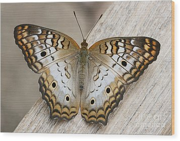 White Peacock Butterfly Wood Print by Judy Whitton