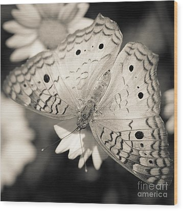 White Peacock Butterfly Wood Print by Tamara Becker