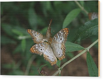 Wood Print featuring the photograph White Peacock Butterflies by Cathy Harper