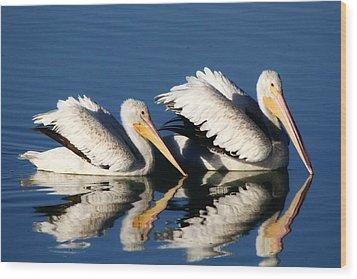 White Pelican Pair Wood Print