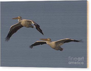 Wood Print featuring the photograph White Pelican Photograph by Meg Rousher