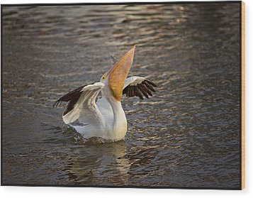 Wood Print featuring the photograph White Pelican by Sharon Jones