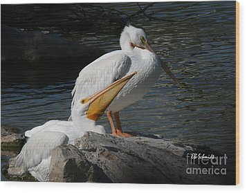 White Pelicans Wood Print by E B Schmidt