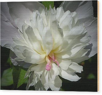 White Peony Wood Print by Elaine Franklin