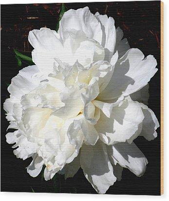 White Peony Wood Print