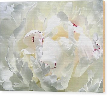 White Peony Wood Print by Will Borden