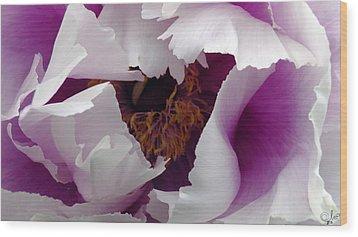 White Peony With Purple Wood Print by Sascha Kolek