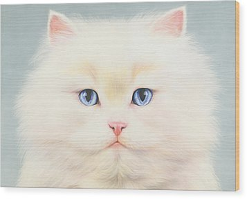 White Persian Wood Print by Andrew Farley