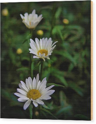 White Petals Wood Print by Cherie Duran