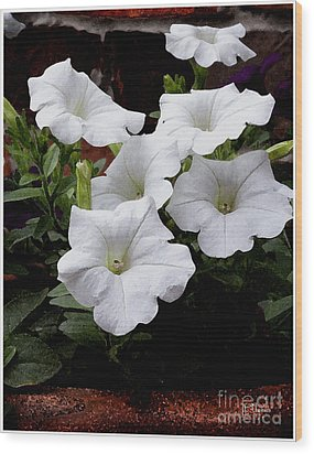 Wood Print featuring the photograph White Petunia Blooms by James C Thomas