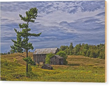 White Pine And Old Barn Wood Print