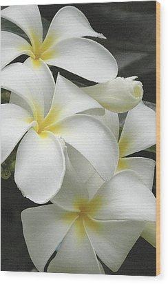 White Plumaria Wood Print by Paul Miller