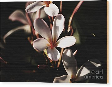 Wood Print featuring the photograph White Plumeria by Angela DeFrias