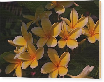 Wood Print featuring the photograph White Plumeria by Miguel Winterpacht