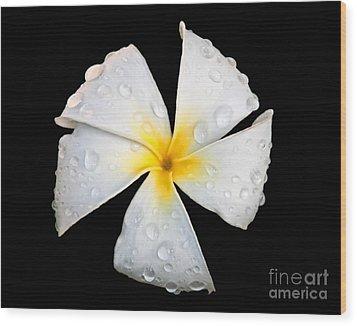 White Plumeria Or Frangipani Flower With Raindrops On Black Wood Print by Valerie Garner