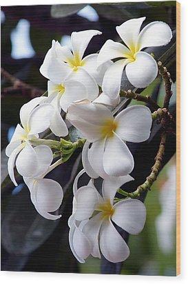 White Plumeria Wood Print by Trever Miller
