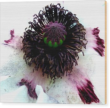 White Poppy Macro Wood Print by The Creative Minds Art and Photography