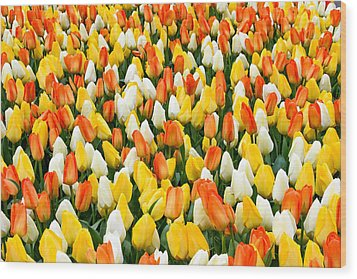 White Orange And Yellow Tulips Wood Print by Menachem Ganon