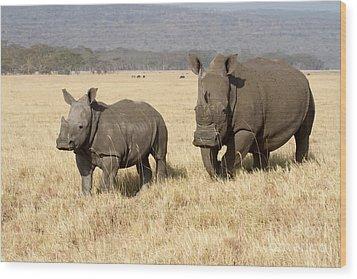 White Rhino Calf Wood Print
