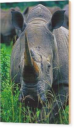 Wood Print featuring the photograph White Rhino by Dennis Cox WorldViews
