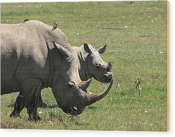 White Rhino Mother And Calf Wood Print by Aidan Moran