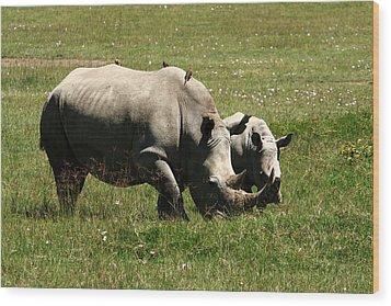 White Rhinoceros Wood Print by Aidan Moran