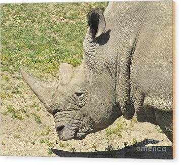 White Rhinoceros Portrait Wood Print by CML Brown