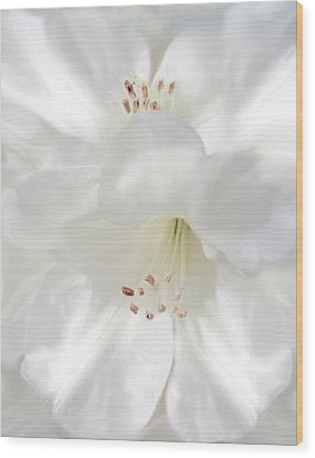 White Rhododendron Flowers Wood Print by Jennie Marie Schell