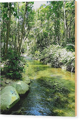 White River Basin Wood Print by Cindy Croal