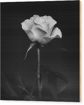 Wood Print featuring the photograph White Rose #02 by Richard Wiggins