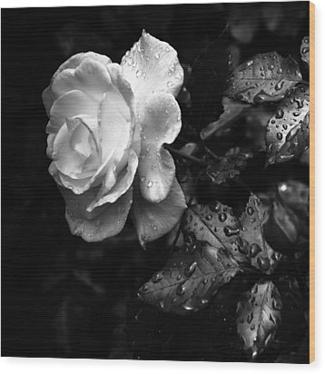 White Rose Full Bloom Wood Print