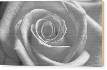 Wood Print featuring the photograph White Rose Glooming by Silke Brubaker