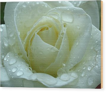 White Rose Wood Print by Juergen Roth