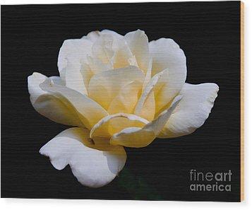 White Rose Wood Print by Lisa L Silva