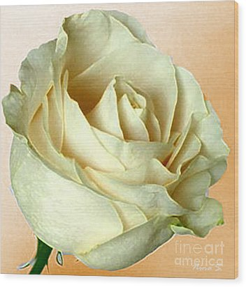 Wood Print featuring the photograph White Rose On Sepia by Nina Silver